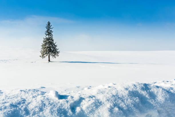 冬の風景。美瑛北海道ジャパン - 雪景色 ストックフォトと画像