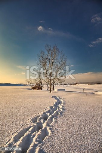Winter scenery with winter groves in Biei Hokkaido Japan