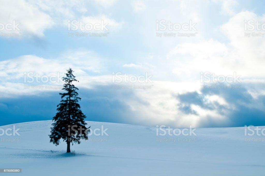 Winter scenery.Biei Hokkaido Japan stock photo