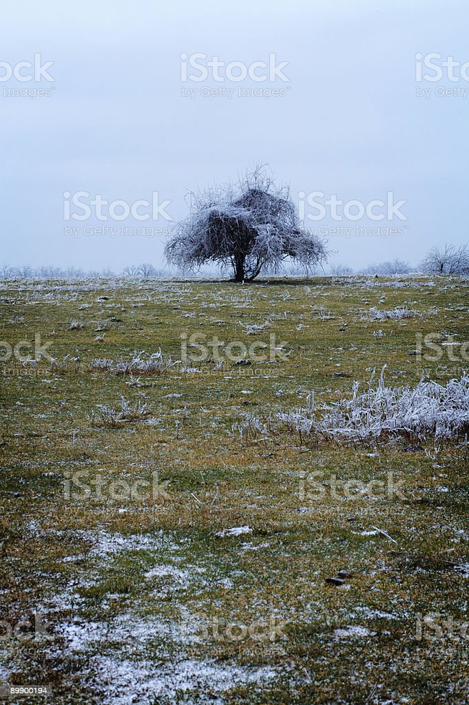 Зимние сцены-Ледяной дождь Стоковые фото Стоковая фотография
