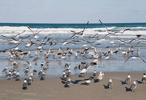 Winter Seagulls on Daytona Beach stock photo