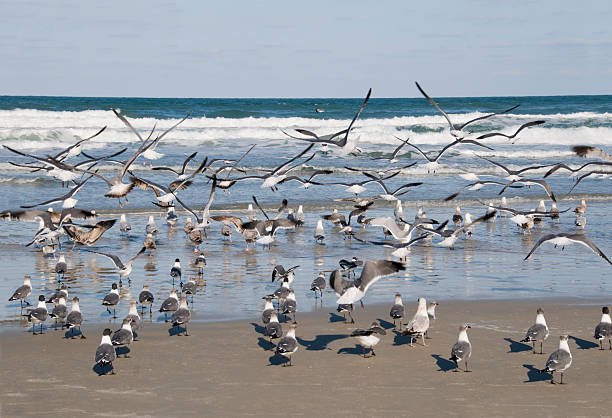 Winter Seagulls on Daytona Beach stock photo