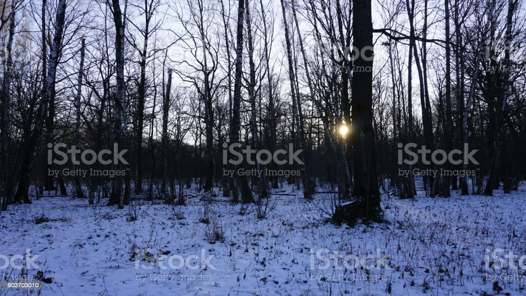 Winter Season In Russia Moscow Stock Photo Download Image Now Istock