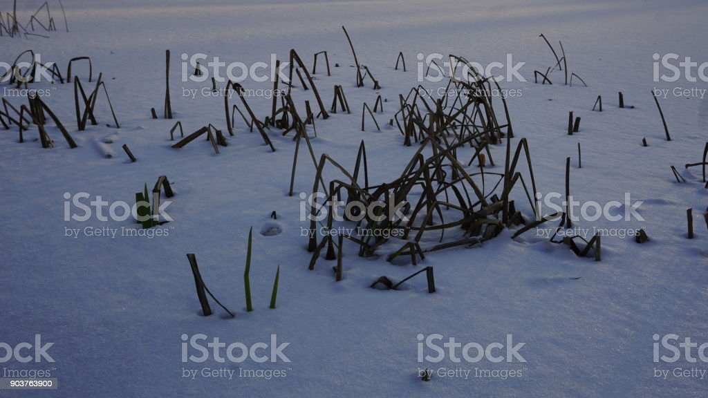 Winter Season In Russia Moscow Stock Photo More Pictures Of Arts Culture And Entertainment