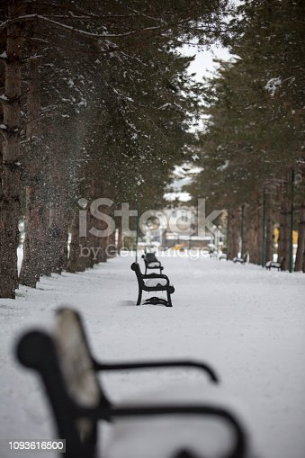 Winter season snowed into the park.