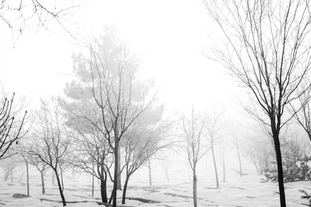 winter season view in the forest - pinaceae stock photos and pictures