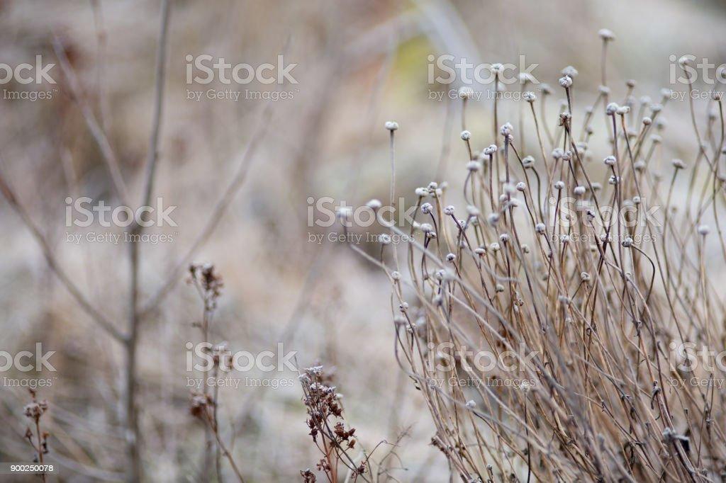 Vinter utsäde huvud bildbanksfoto