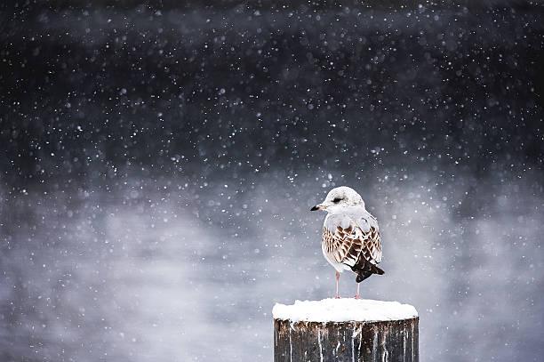 Winter silence stock photo