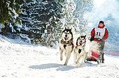 istock Winter Sled dog racing musher and Siberian husky 148740446