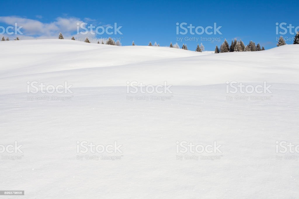 Winter snow and firs landscape in south tirol Italy  magic nature background stock photo