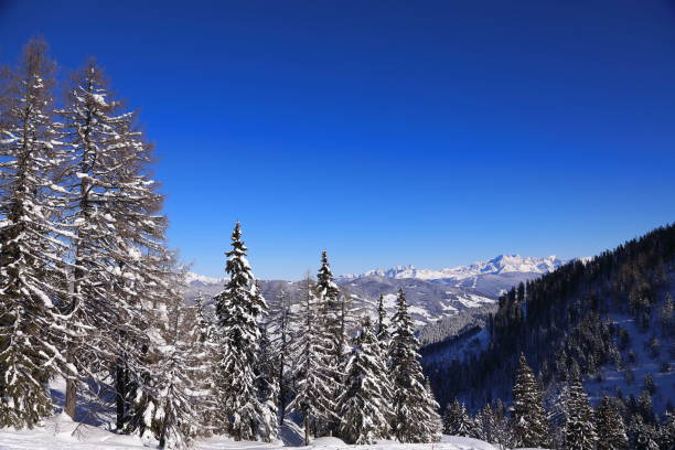 Winter snow covered spruce trees in Wagrain Skiamade Ski resort Snow-covered ski slopes and trees in the Austrian Alps; Wagrain im Pongau, Austria pejft stock pictures, royalty-free photos & images