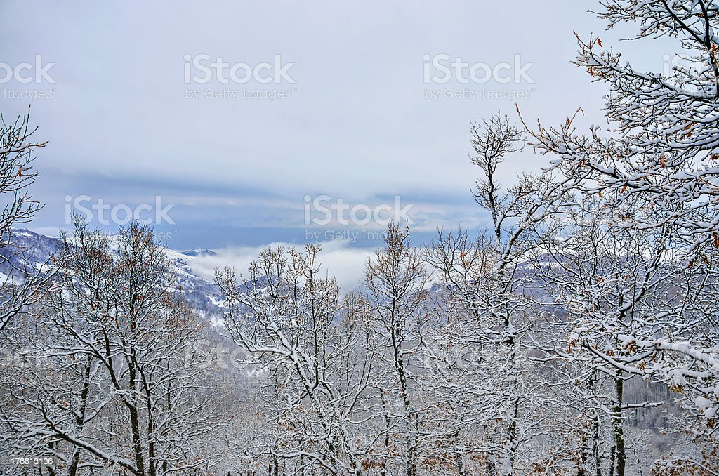 winter snow covered trees and dull clouds sky royalty-free stock photo