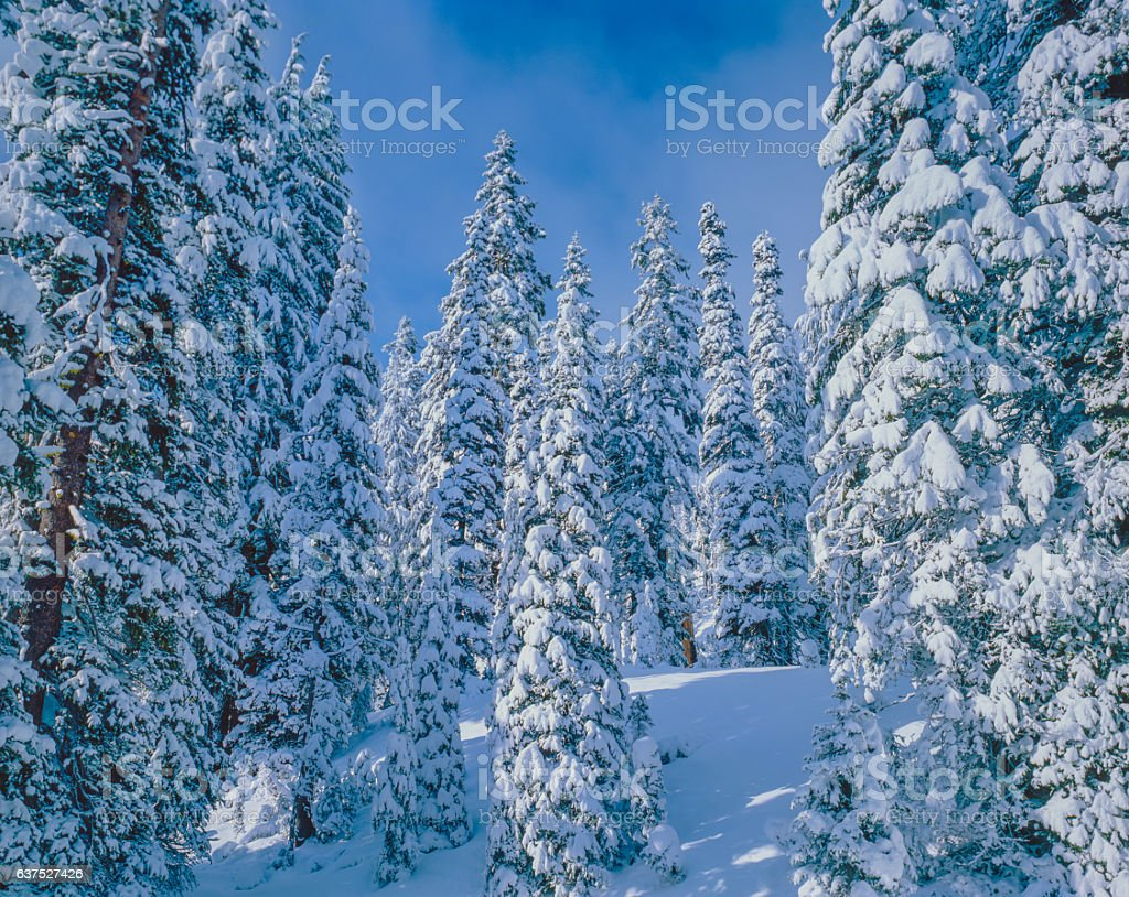 Winter snow Crater Lake National Park, cascade mountains, OR(P) stock photo