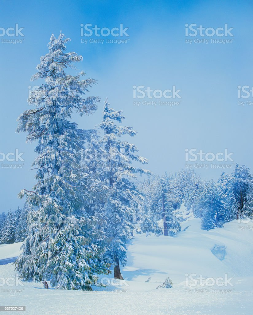 Winter Snow Crater Lake National Park Cascade Mountains,OR(P) stock photo