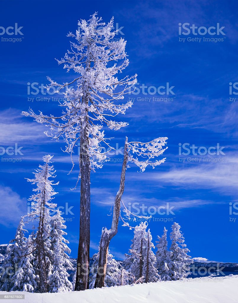 Winter Snow Crater Lake National Park Cascade Mountains,OR stock photo