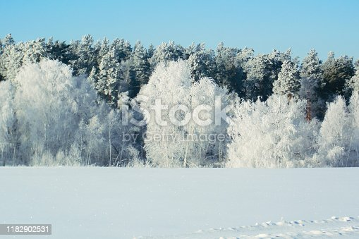 Winter snow forest background. Landscape and cold nature, snowy tree. White ice scene and blue sky. Christmas frost. Frozen xmas. Outdoor wonderland. Panorama. Scenic view like in fairytale.
