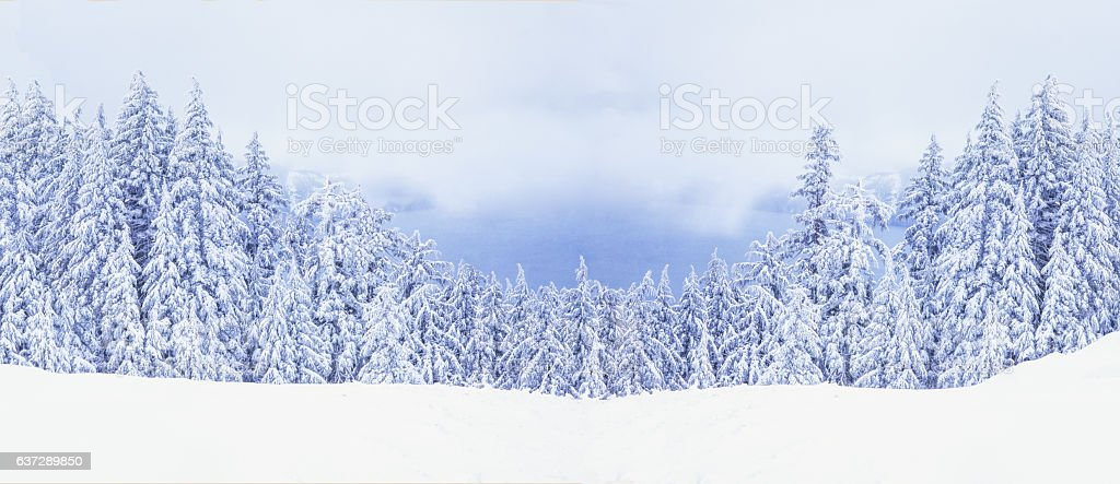 Winter Snow Ladened Trees At Crater Lake National Park (P) stock photo
