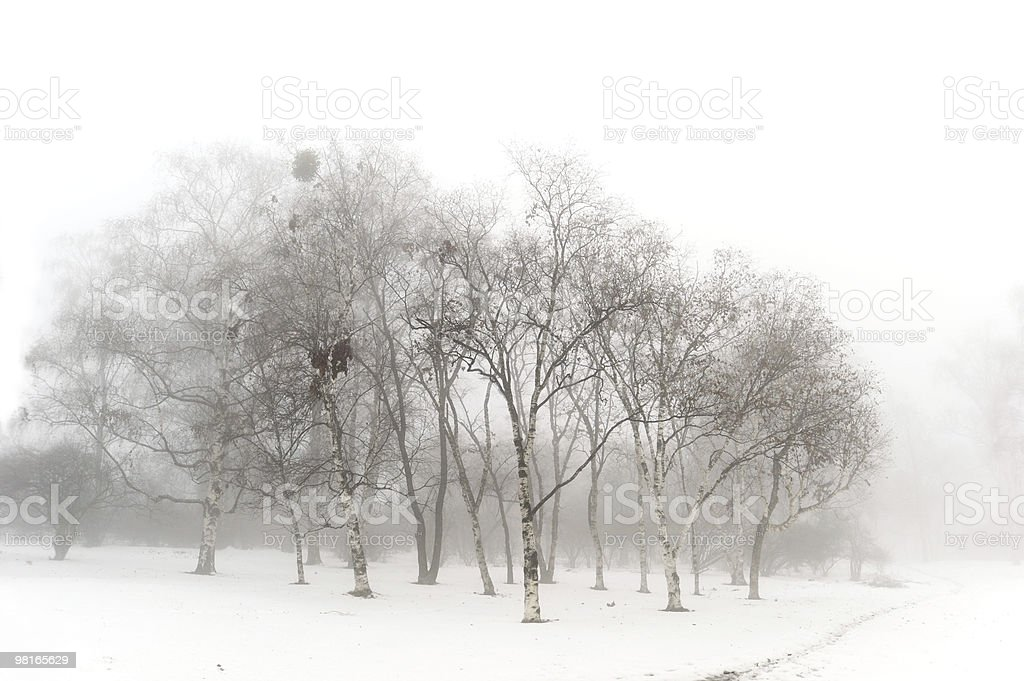 Winter snow park foto stock royalty-free