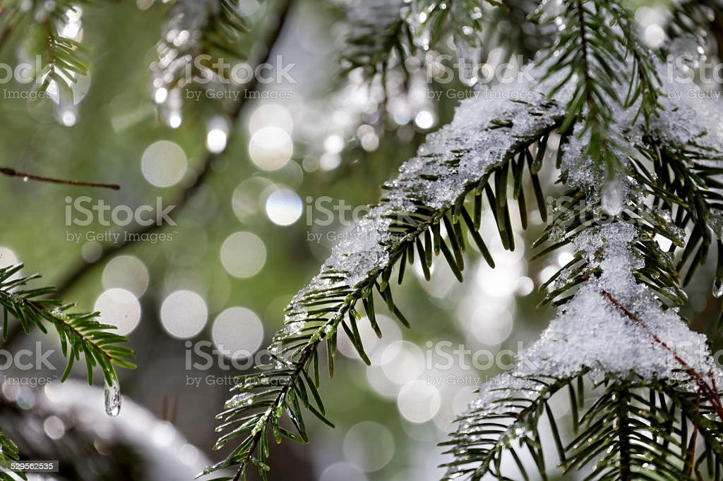 winter, snow stock photo