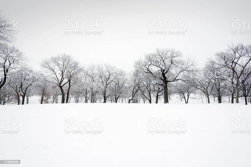 Winter Snow Treelined Landscape of Forest, Trees in Scenic Park royalty-free stock photo