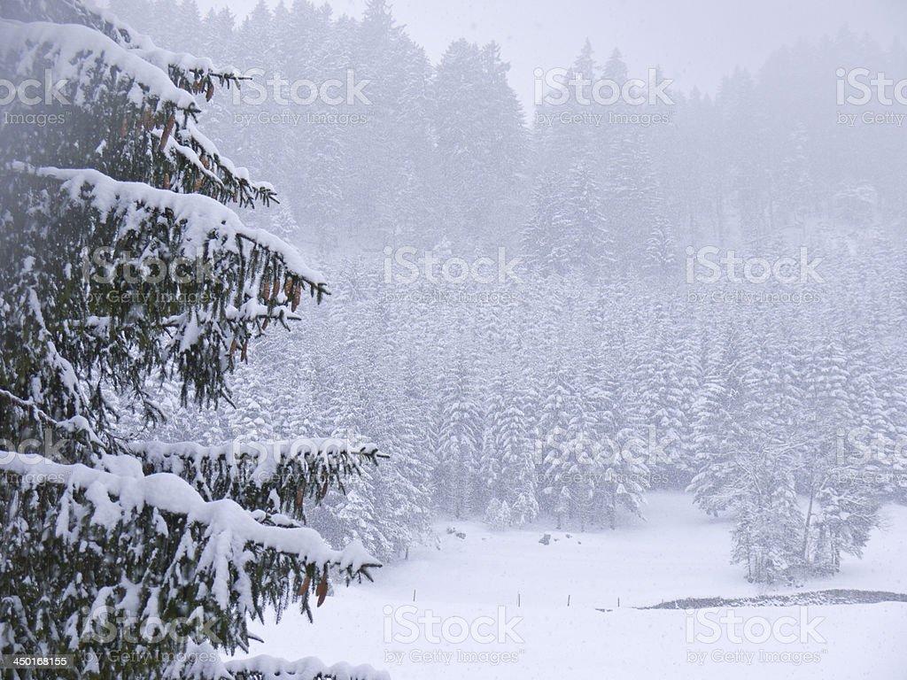 Winter snow trees royalty-free stock photo