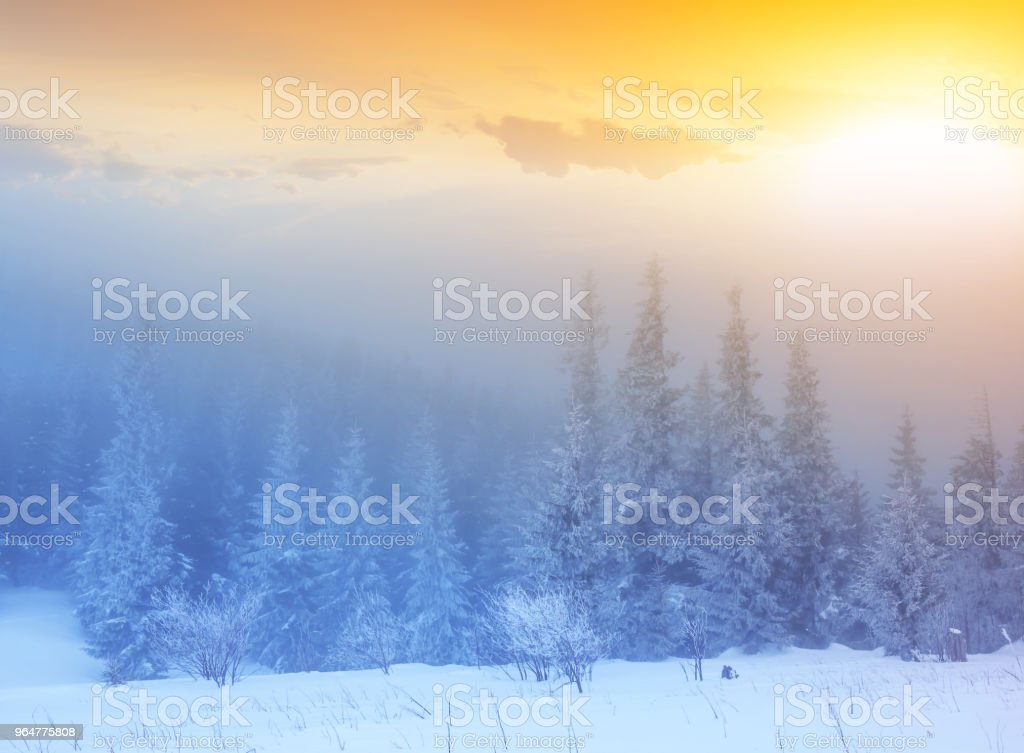 winter snowbound forest in a blue mist at the sunset royalty-free stock photo