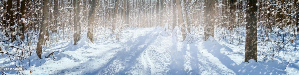 winter snow-covered road through the deciduous forest - winter landscape, banner, panorama stock photo
