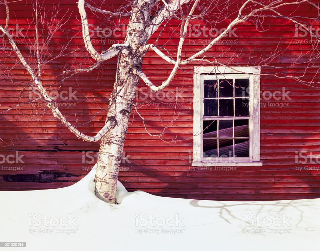 Winter snowscape with rustic barn window and birch tree, Vermont stock photo