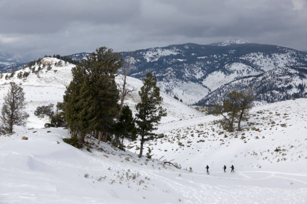With winter storm clouds overhead, a trio of people snowshoe on the snow covered Blacktail Deer Plateau, Yellowstone National Park Wyoming.