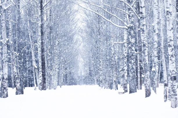 winter snowy day in a beautiful forest - inverno imagens e fotografias de stock