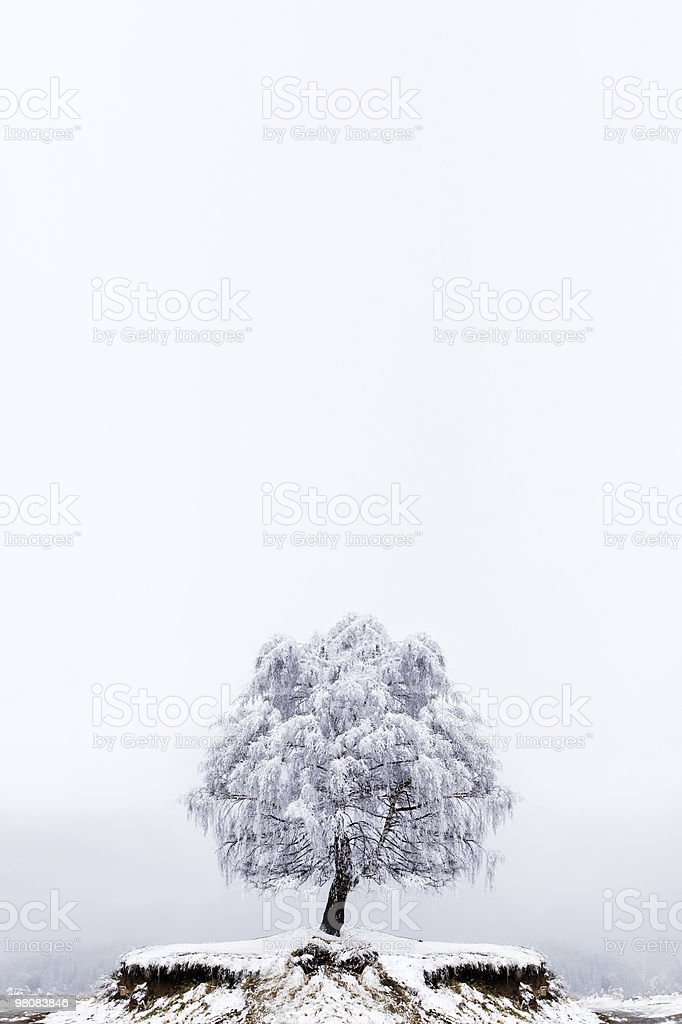 Winter Solitude tree royalty-free stock photo