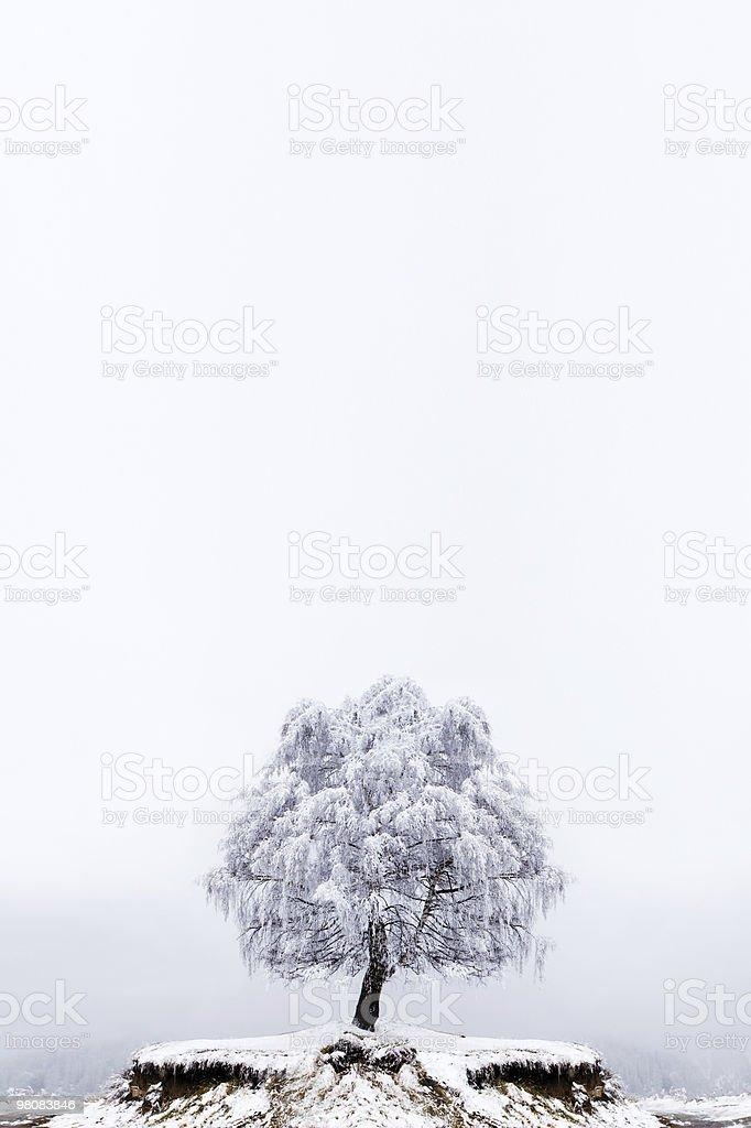 Winter Solitude tree stock photo
