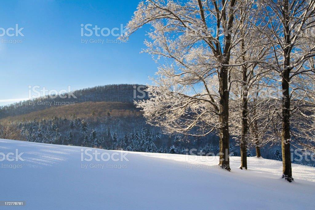 Winter Sparkle royalty-free stock photo