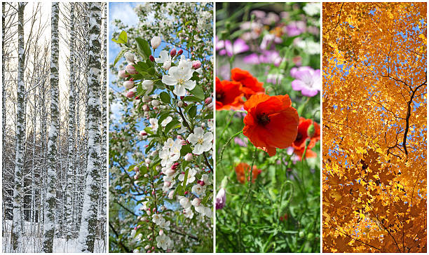 Winter, spring, summer, autumn. Four seasons. Nature in winter, spring, summer and autumn. Four seasons. four seasons stock pictures, royalty-free photos & images