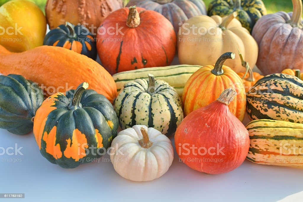 Winter squash collection stock photo