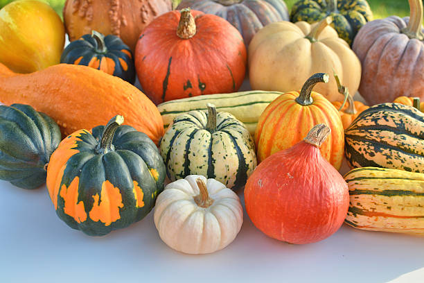 winter squash collection - gourd stock photos and pictures