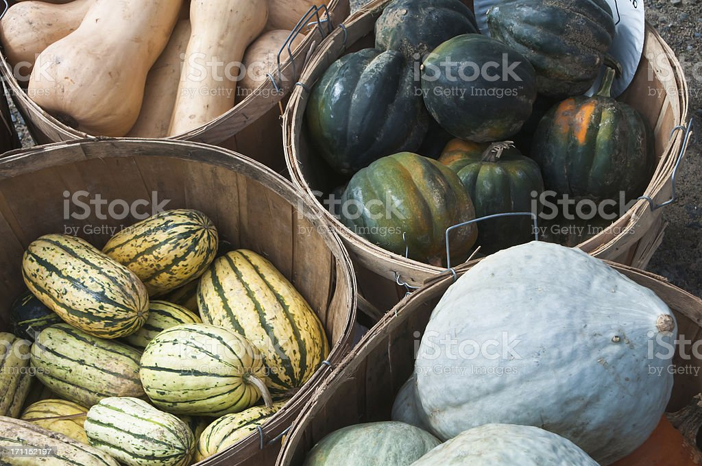 Winter Squash Variety royalty-free stock photo