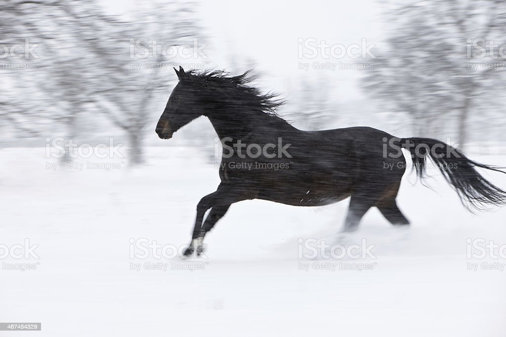 Winter Storm Horse stock photo