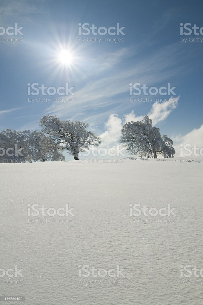 winter sun and snow royalty-free stock photo