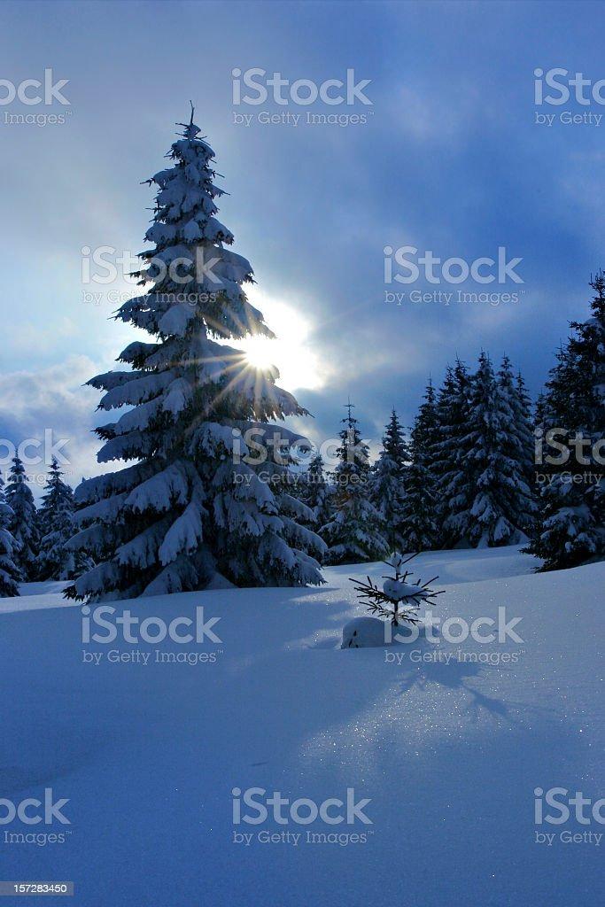 Winter Sun royalty-free stock photo