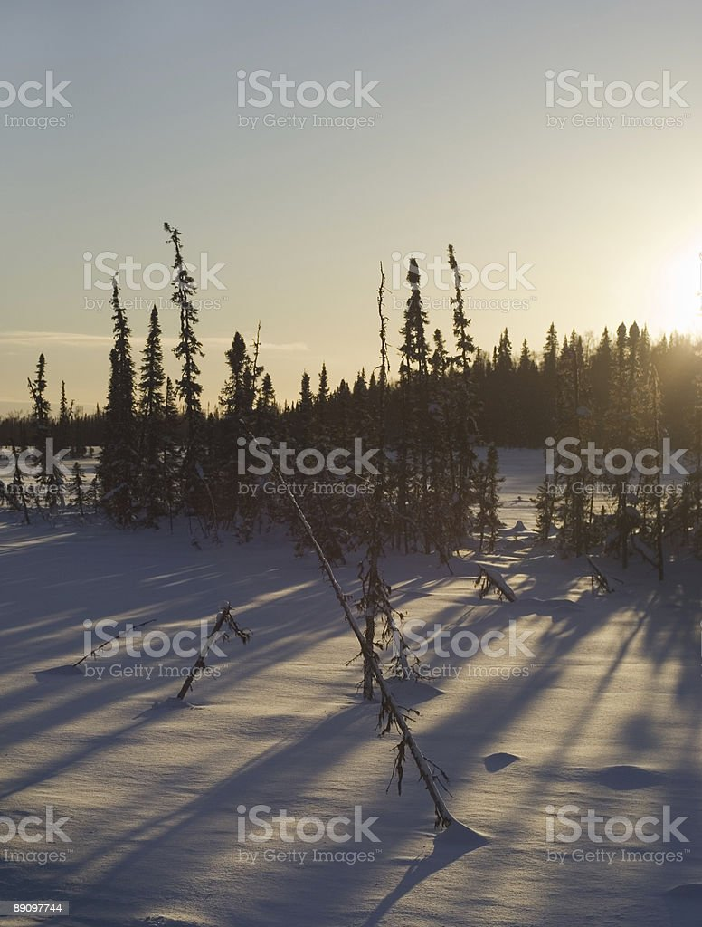 Winter Sun setting behind trees royalty-free stock photo
