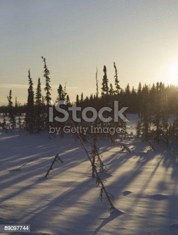 Зимние солнце обстановке за деревьями — стоковые фотографии и другие картинки Аляска - Штат США