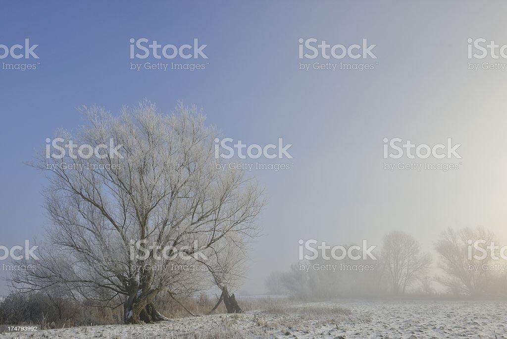 Winter sunlight royalty-free stock photo