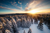 Idyllic winter landscape with snowcapped trees at sunrise.