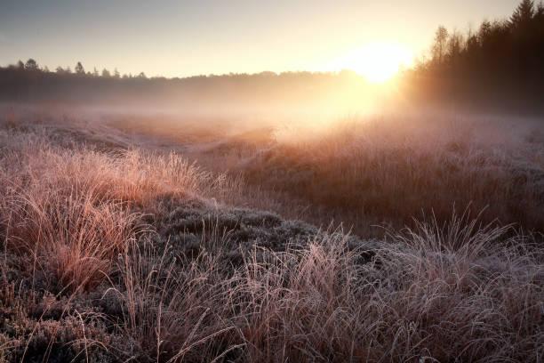 Winter zonsopgang boven frosty weide in bos foto