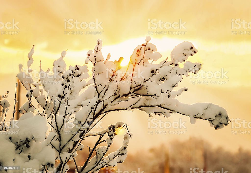 Winter sunrise royalty-free stock photo