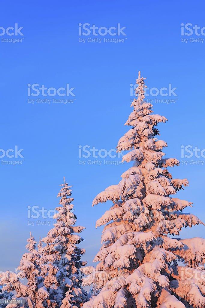 Winter Sunrise royalty-free stock photo
