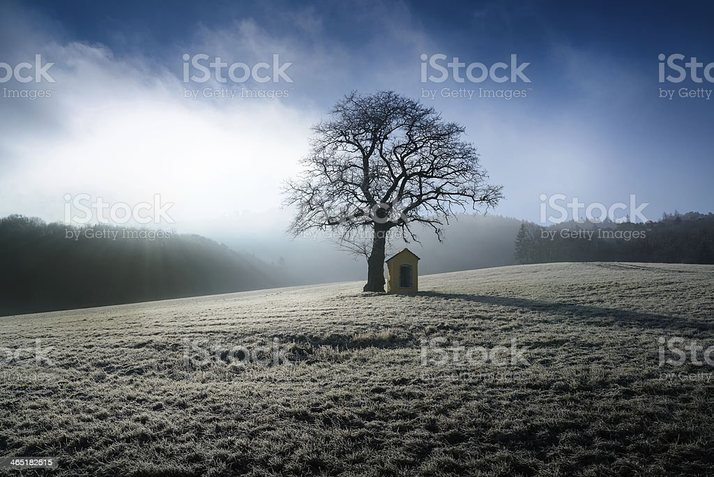 winter sunrise with frost stock photo