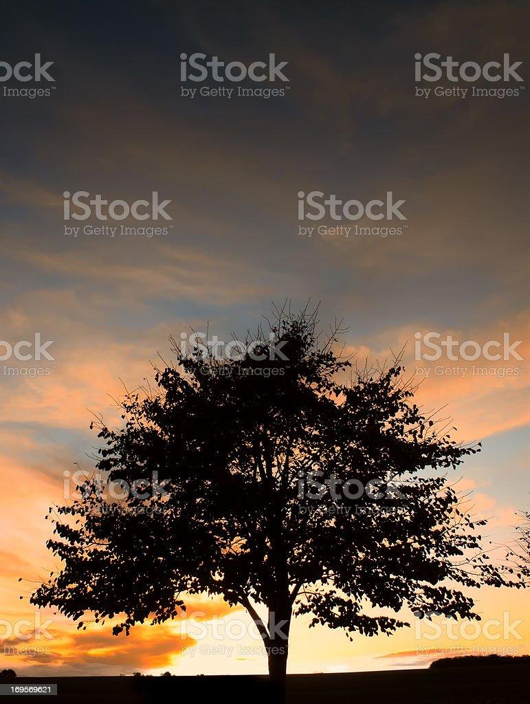 Winter Sonnenuntergang hinter schönen Palmen Lizenzfreies stock-foto