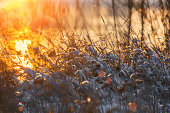 Winter sunset in the meadow